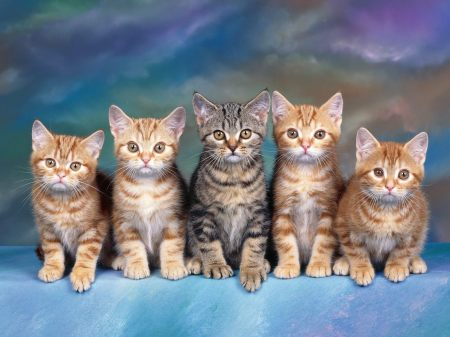 kittens gatitos