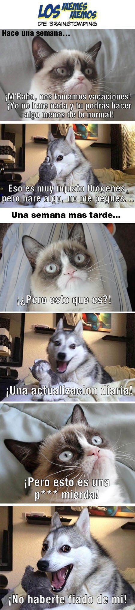 los-memes-memos-de-brainstomping-diogenes-gato-mrabo-perro